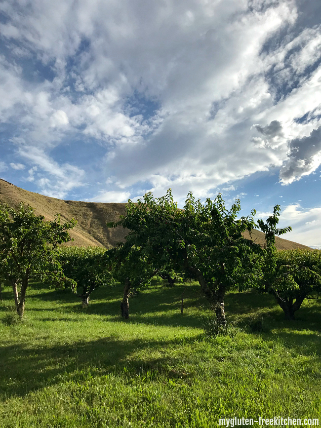 Cherry trees at Tyler's Rocky Point Orchard in Emmett Idaho